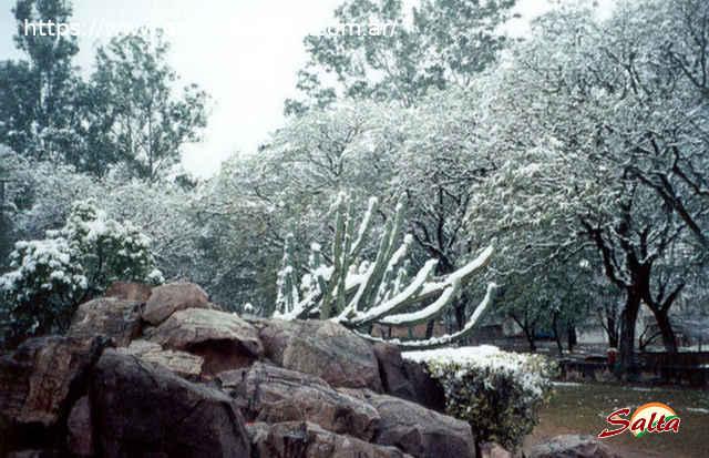 Foto de los árboles de la ciudad de Salta teñidos de blanco.